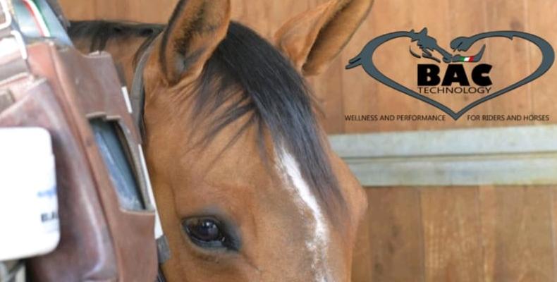 """BAC partner del seminario """"Testa e collo del cavallo"""" 2"""