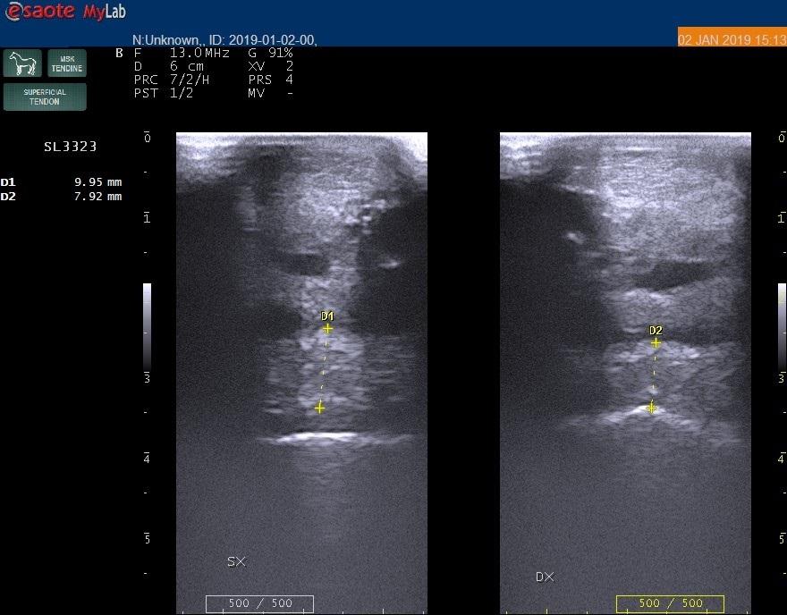 Bac Technology presenta il caso di Fulmine, in collaborazione con la Clinica di San Rossore