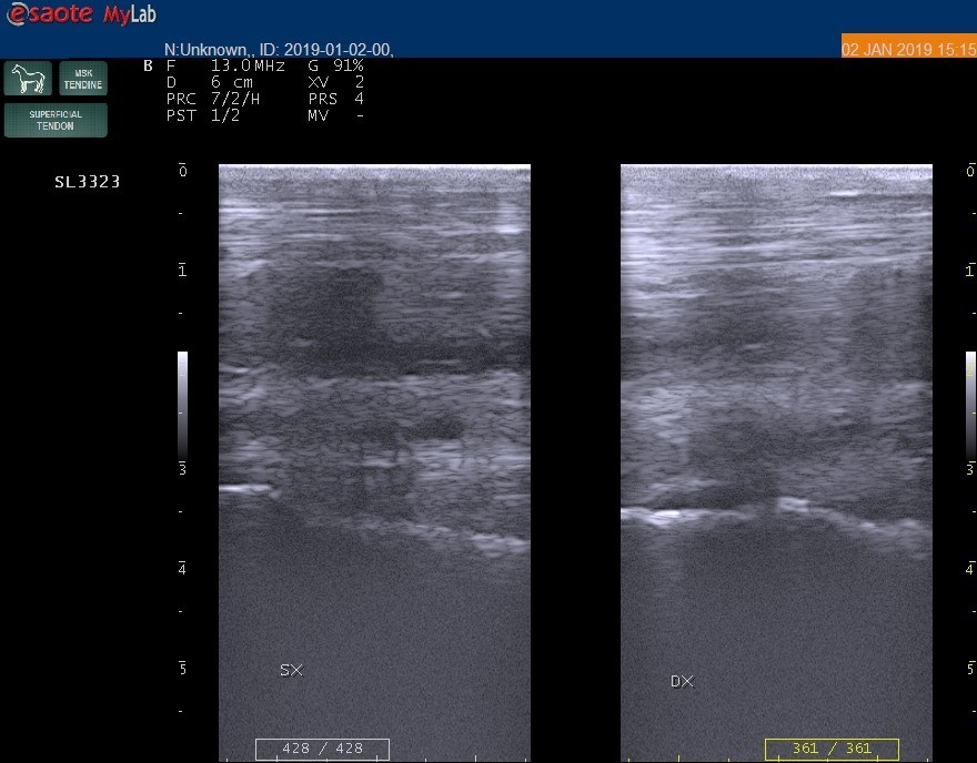 Bac Technology presenta il caso di Fulmine, in collaborazione con la Clinica di San Rossore 1