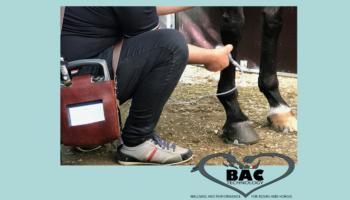 Trattamenti riabilitativi sui cavalli con BAC Technology: l'esperienza di Marco Massara